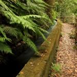 Bosque de Los Tilos · Apartamentos Míriam · La Palma Foto: Vanmarty.com